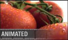 Veggies (silent) - Widescreen PPT PowerPoint Video Animation Movie Clip