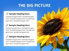 The Big Picture PPT PowerPoint presentation slide layout