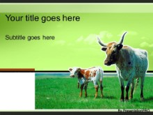 Download cattle graze green PowerPoint Template and other software plugins for Microsoft PowerPoint