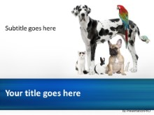 Friendly Pets PPT PowerPoint Template Background