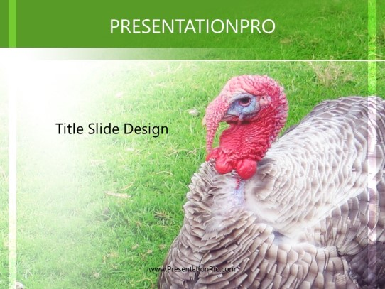 Turkey Powerpoint Template Background In Agriculture Animals