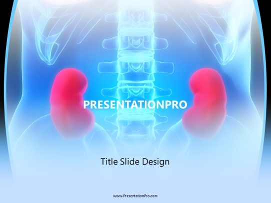 Kidneys Powerpoint Template Background In Medical