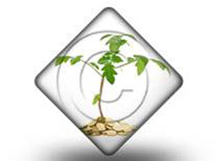 Money Plant DIA PPT PowerPoint Image Picture