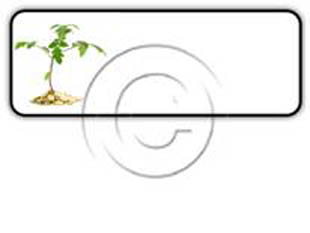 Money Plant Rectangle PPT PowerPoint Image Picture
