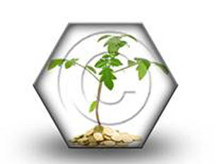 Money Plant HEX PPT PowerPoint Image Picture