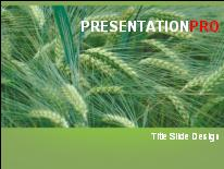 Barley powerpoint template background in agriculture animals download barley powerpoint template and other software plugins for microsoft powerpoint toneelgroepblik