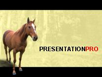 Horse 2 powerpoint template background in agriculture animals download horse 2 powerpoint template and other software plugins for microsoft powerpoint toneelgroepblik Choice Image