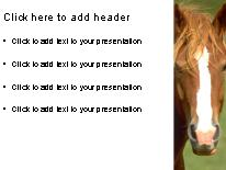 Horse powerpoint template background in agriculture animals download horse powerpoint template and other software plugins for microsoft powerpoint toneelgroepblik Image collections