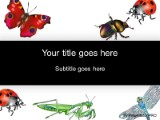 Insects PowerPoint template background in Nature PowerPoint ppt ...